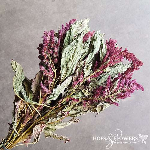 amaranthus red dried
