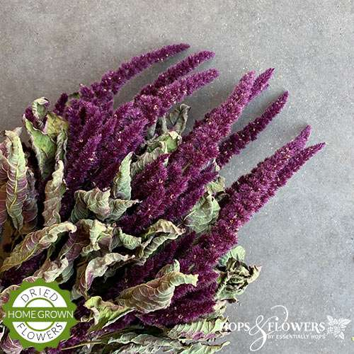 Dried red amaranthus
