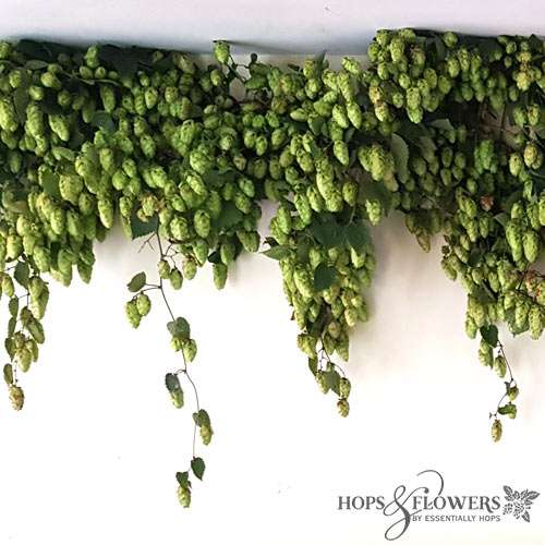 hop garland, fresh hop garlands, hop bines, decorative hops