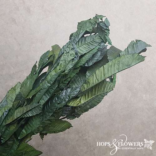 Chestnut Preserved Dyed Green Leaves