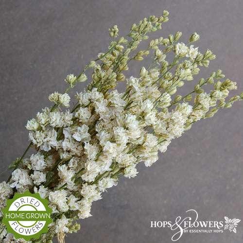 larkspur white sale