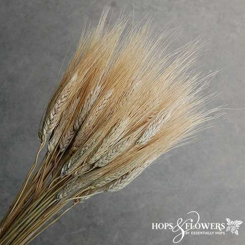 wheat blond beard