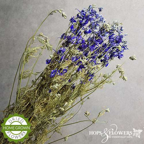 blue larkspur dried