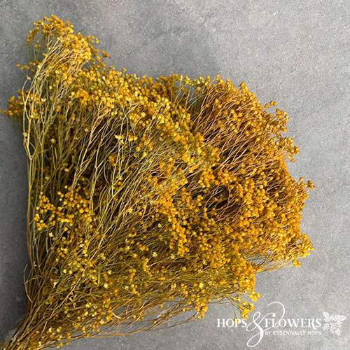 broom bloom dyed yellow